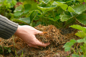 Mulching to kill weeds