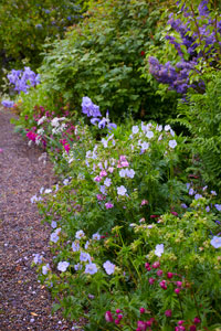 Shrubs and trees for herbaceous border
