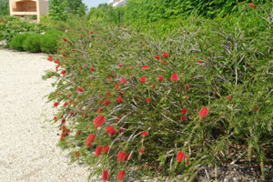 Shrubs and trees for coastal gardens