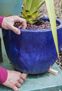Protecting your potted plants in winter