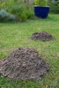 How can you deal with moles?
