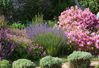Shrubs and trees for a scorching spot