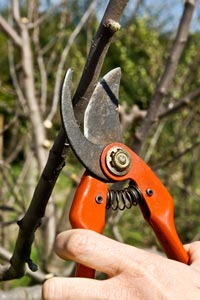 The basic principles of pruning