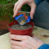 Growing seeds in a pot