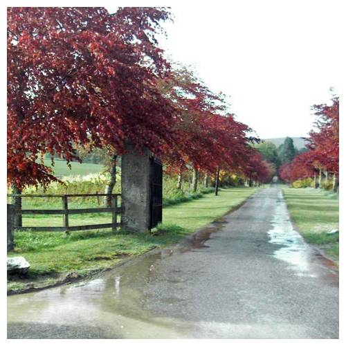 beech bluff latin dating site Bluff estates sugarsearch dating  from bluff estates  your use of the site constitutes acceptance of the sugarsearch terms of use agreement .