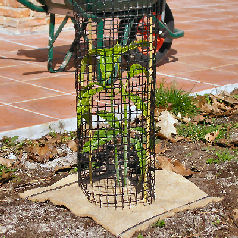 Protective Netting For Shrubs