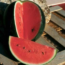 Watermelon seeds - 'Sugar Baby' Watermelon