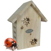 Ladybirds shelter