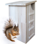 Squirrel Shelter - Caillard