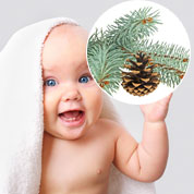 Baby Pine Tree for a birth or a christening