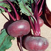 Beetroot seeds - Dark Egyptian Beetroot Seeds