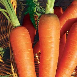 Colmar Carrot with red heart