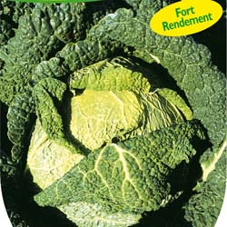 Cabbage seeds - Savoy Cabbage king F1 Hybrid