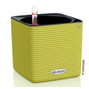 CUBE Color 14 cm - Lime - LECHUZA