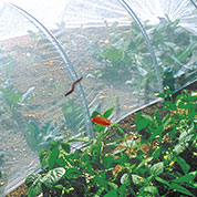 Anti insects net for vegetable garden - 2.2x10m