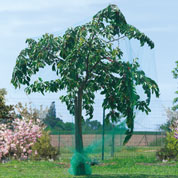 Anti birds net for fruit trees - 5x10 m