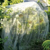 Fruits protective net - Anti-Codling Moth -5,20x5m