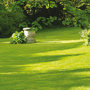 Lawn Shady Areas