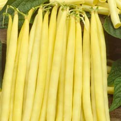 Beans seeds - Dwarf French Bean 'Minodor Beurre'