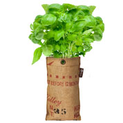 Hanging Growing Kit - Basil