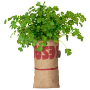 Hanging Growing Kit - Coriander