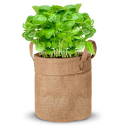 Growing kit – Basil
