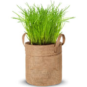 Growing kit – Chives