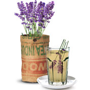 Tea Plants Growing Kit – Lavender