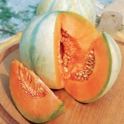 Melon seeds - 'Super précoce du Roc' Melon