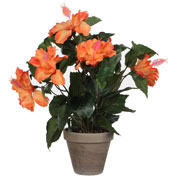 Artificial Plant - Orange Hibiscus - MICA