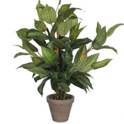 Artificial Plant - Hosta - MICA