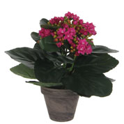 Artificial Plant - Purple Kalanchoe - MICA