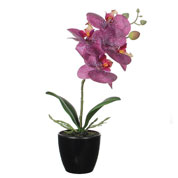 Artificial Plant - Purple Phalaenopsis - MICA