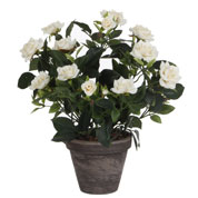 Artificial Plant - White Rose - MICA