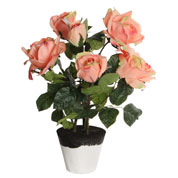 Artificial Plant - Peach Rose - MICA