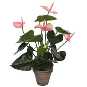 Artificial Plant - Pink Anthurium - MICA