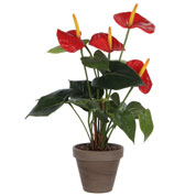 Artificial Plant - Red Anthurium - MICA