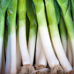 Leek seeds - 'Gros Long d'Eté' Summer Leek