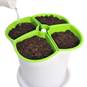 Pot for aromatic plants - Green and White
