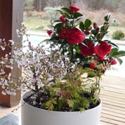 Spring container 'Spring Red Cherry'