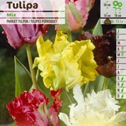 Tulip Parrott, Mixed