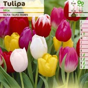 Tulip Triumph, Mixed