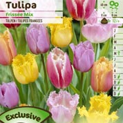 Tulip Lacy, Mixed